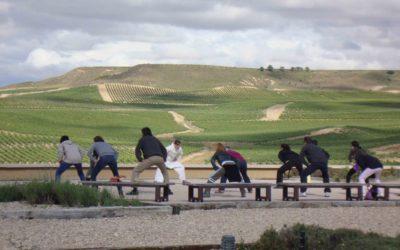 ¡Abierto por vendimia!, visita las propuestas para descubrir la Ruta del Vino de Navarra