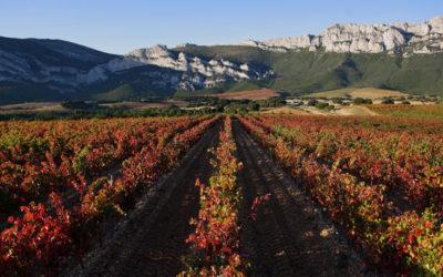 La Ruta del Vino de Rioja Alavesa es naturaleza en estado puro