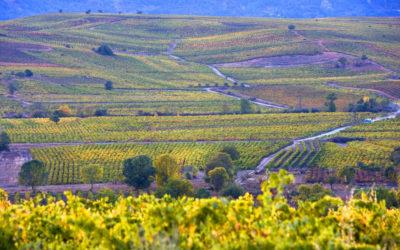 ACEVIN y Rutas del Vino de España celebran, un año más, el Día Mundial del Enoturismo