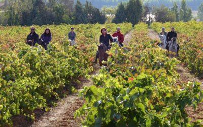 Rutas del Vino de España: el viaje perfecto que has soñado en estas semanas