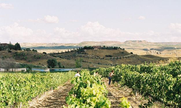 Madrid se suma a las Rutas del Vino de España