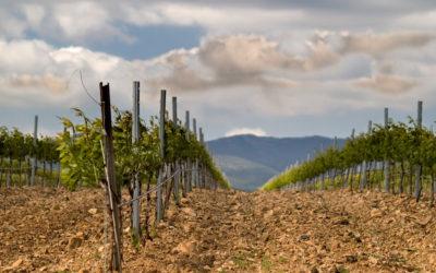 Nuevas Rutas del Vino para el 2021