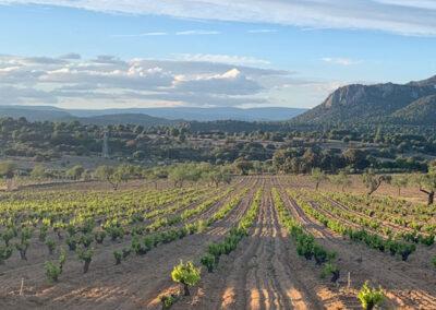 paisaje de un viñedo