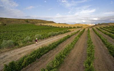 Xacobeo en las Rutas del Vino de España